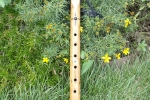 Lone Crow Auction Flute 1