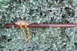 Walnut/Oak Stripe 1
