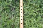 Kathleen\'s Flute 1
