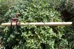 Ash Skunk Flute 1