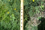 Ash Skunk Flute 2